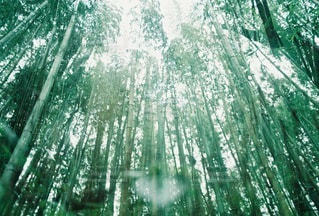 自然の写真・画像素材[4584]