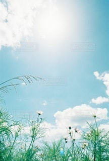 自然の写真・画像素材[4571]