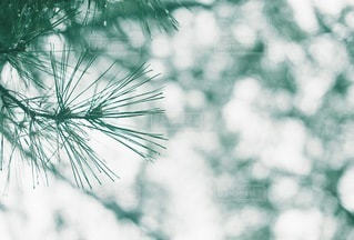 自然の写真・画像素材[4548]