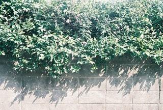 風景の写真・画像素材[4540]