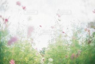 自然の写真・画像素材[4530]