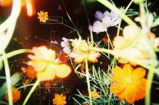 花の写真・画像素材[280367]