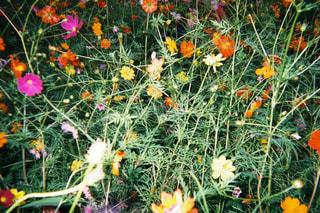 花の写真・画像素材[280368]