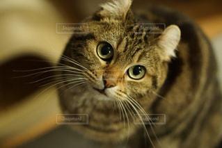 猫の写真・画像素材[274015]