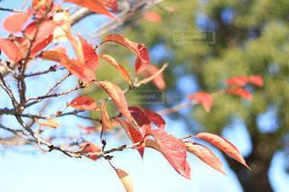 自然の写真・画像素材[276417]