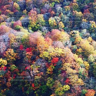 自然の写真・画像素材[274496]