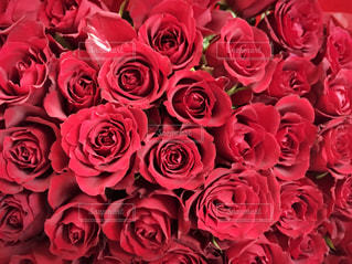 花の写真・画像素材[274516]