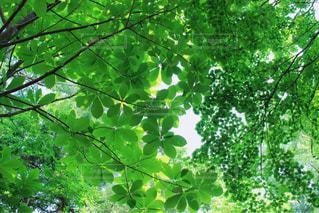 自然の写真・画像素材[285560]