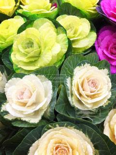 花の写真・画像素材[292055]