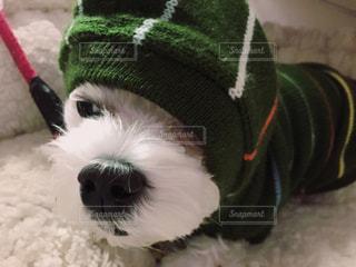 犬の写真・画像素材[310982]