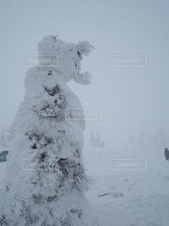 No.381192 雪
