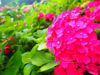 花の写真・画像素材[381194]