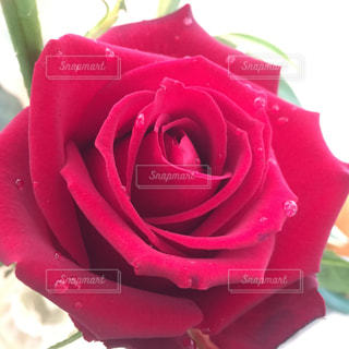 花の写真・画像素材[381197]