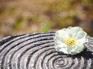 花の写真・画像素材[381199]