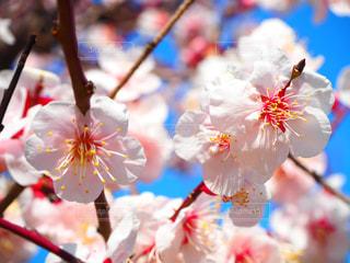 花の写真・画像素材[381200]