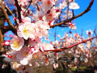 花の写真・画像素材[381201]