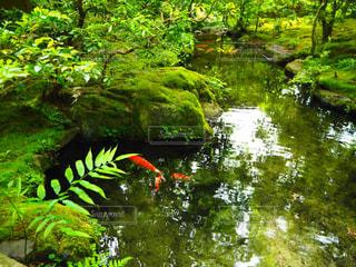 森林の写真・画像素材[485038]