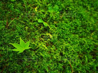 森林 - No.485039