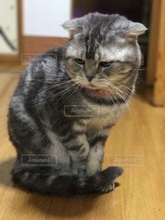 猫の写真・画像素材[293655]