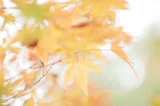 紅葉 - No.852984