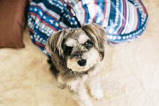 地面に横たわっている犬の写真・画像素材[1026772]