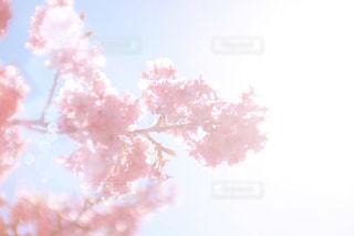 木のぼやけた写真の写真・画像素材[1038724]