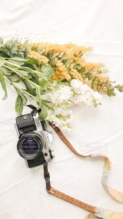 近くの花のアップの写真・画像素材[1046716]