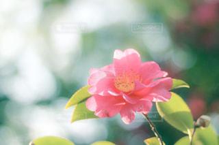 近くの花のアップの写真・画像素材[1664931]