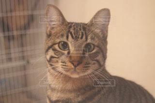 猫の写真・画像素材[274996]