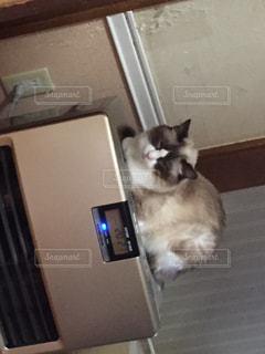 猫の写真・画像素材[294337]