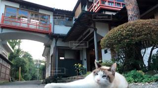 猫の写真・画像素材[274801]