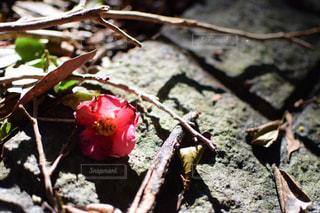 花の写真・画像素材[306350]