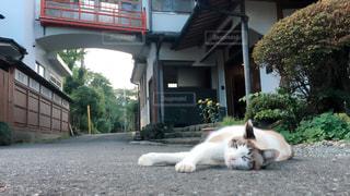 猫の写真・画像素材[367083]