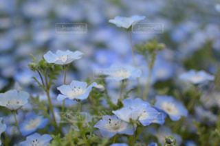近くの花のアップの写真・画像素材[729850]