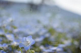 近くの花のアップの写真・画像素材[729851]