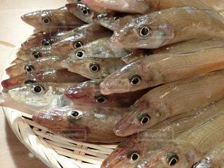 テーブルの上に座っている魚の写真・画像素材[735818]