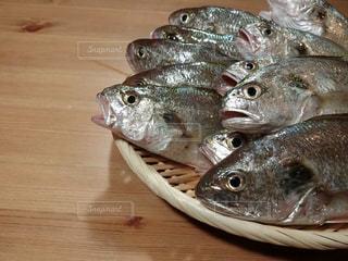 近くに魚のアップの写真・画像素材[735823]
