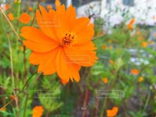 近くの花のアップの写真・画像素材[759037]