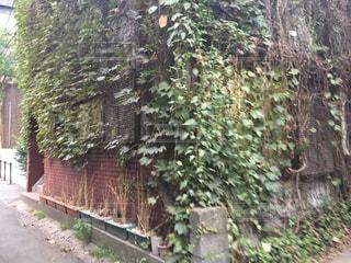 建物の側に木にパスの写真・画像素材[767050]