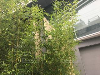 建物の前にツリーの写真・画像素材[767052]