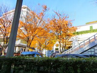 秋色の写真・画像素材[904909]