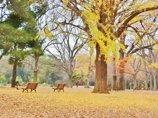 公園の大きな木 - No.909664