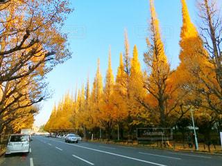 道の端に木の写真・画像素材[909737]