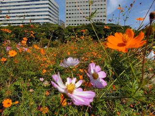 フィールドの花と花瓶の写真・画像素材[965643]