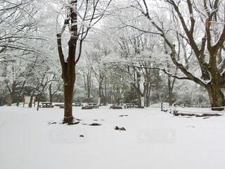 雪に覆われた木の写真・画像素材[971426]