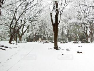 雪に覆われた木の写真・画像素材[971427]