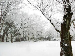 雪に覆われた木の写真・画像素材[971428]