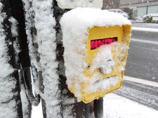 雪に覆われた信号機の写真・画像素材[971429]