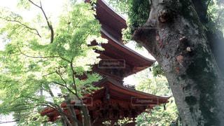 建物の側に木の写真・画像素材[978273]