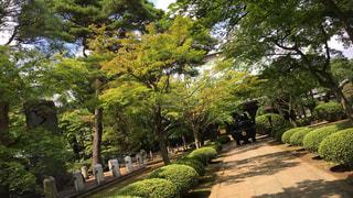 庭のベンチの写真・画像素材[978340]